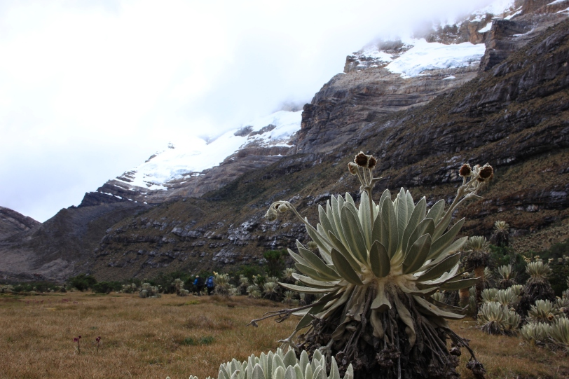 Valle de Los Cojines