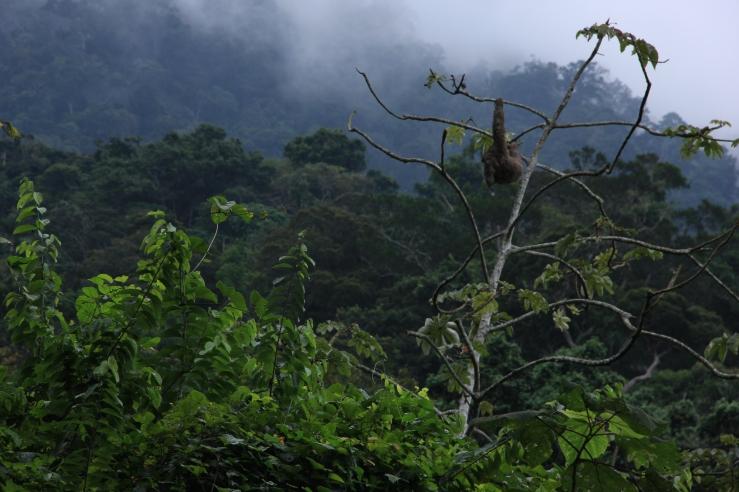 Sloth, Caminata San Sebastian.