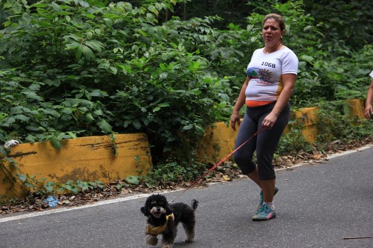 That little dog walked the entire 42 km, Caminata San Sebastian.
