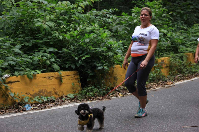 That little dog walked the entire 42 km, Caminata San Sebastian.