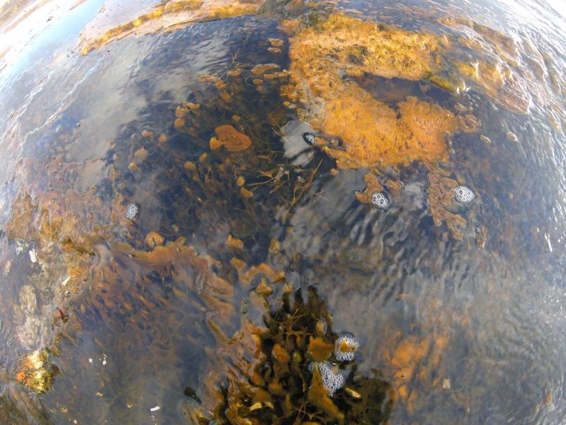 yellowstone-thermal-goop