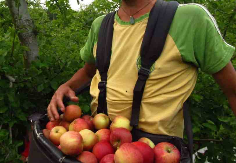 apple-picking-bag